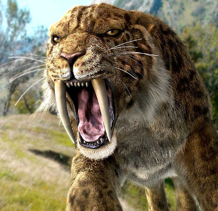Tigrul cu dinti sabie - smilodonul