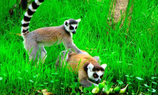 Madagascar – al optulea continent