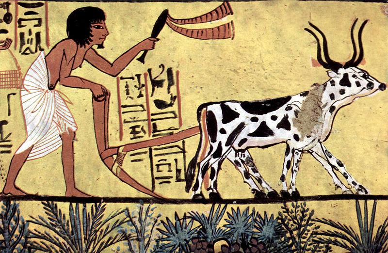 Agricultura in Egipt