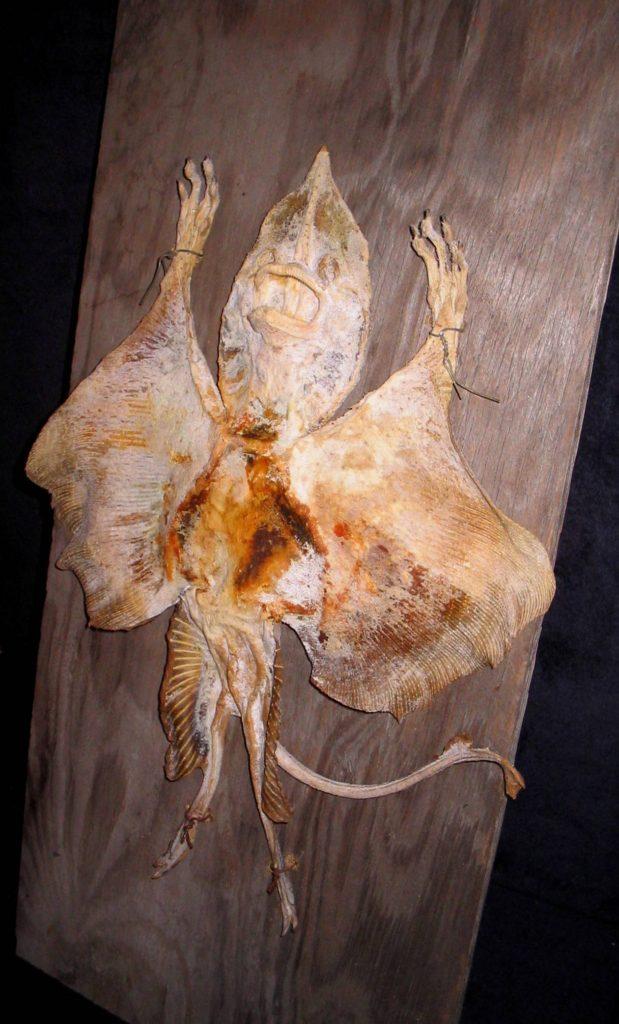 Jenny Haniver - Sea Devil