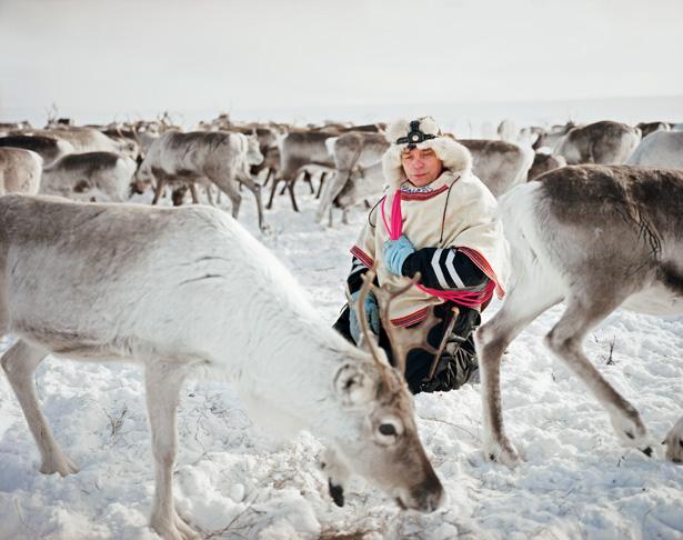 ultimii crescatori de reni din Laponia
