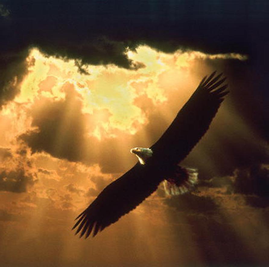 vultur animal simbol