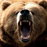 Ursul – animal simbol