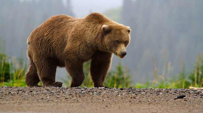 Ursul - animal simbol