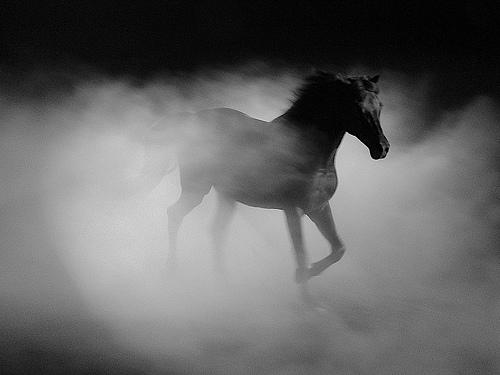 Calul – mitologia zeilor