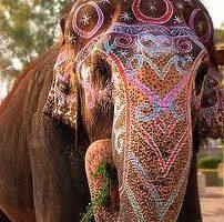 Elefantul in lumea simbolurilor