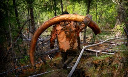 Cum sa vanezi mamutii in zilele noastre?