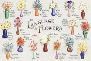 Simbolismul florilor si semnificatiile culorilor in diverse culturi